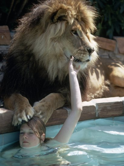 Melanie Griffith et le llion Neil. Sherman Oaks, California May 1971 Photo - Michael Rougier Time Inc Owned Merlin- 1200550
